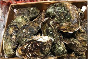 vendita ostriche pescheria mare azzurro alcamo