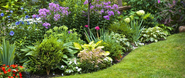 giardinaggio terni
