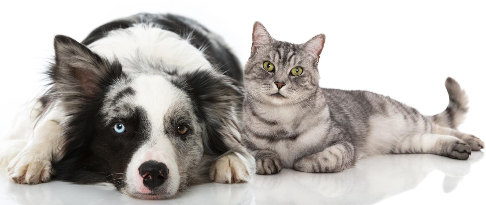 Medicina veterinaria Carrara (MS)