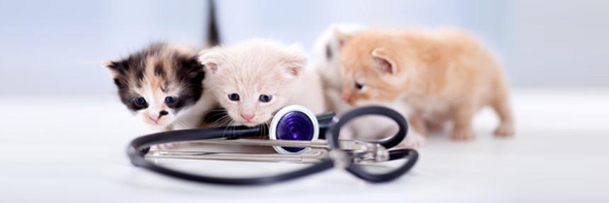 pronto soccorso veterinario brindisi