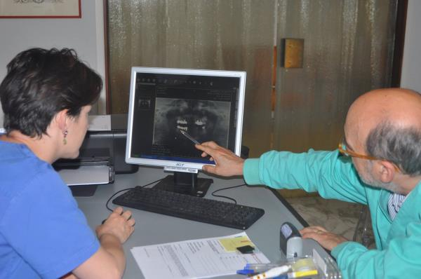 endodonzia milano