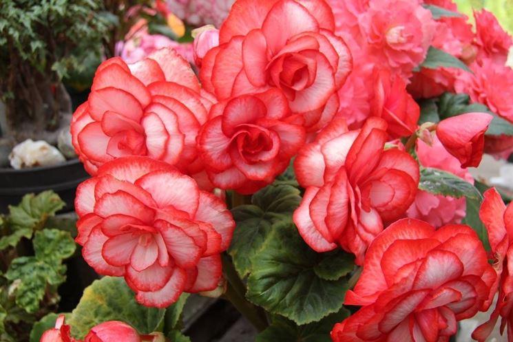 negozio fiori terni