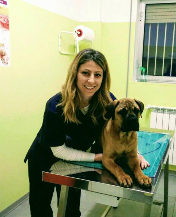 veterinario cani aquila