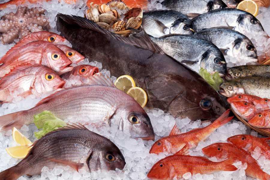 Fornitura e Vendita Pesce fresco e surgelato Arma di Taggia Imperia Savona Costa Azzurra | BOTTI CATERING FOOD SERVICE