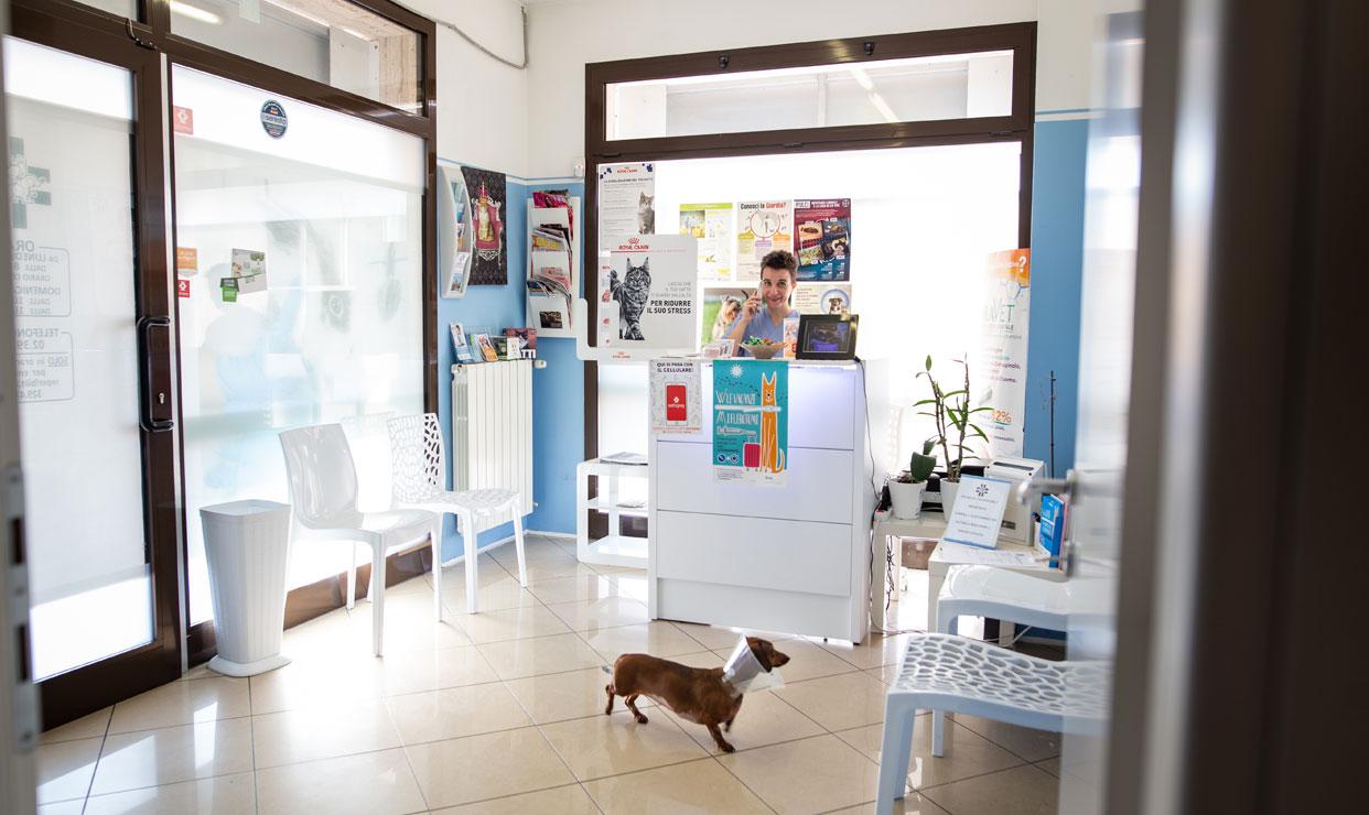 veterinario milano