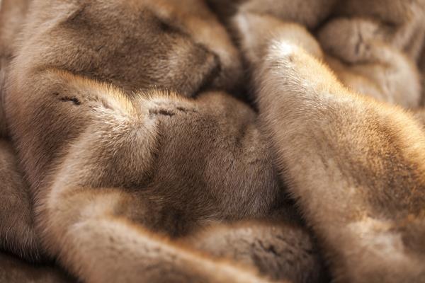 lavaggio pelliccie torino