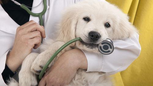 servizi clinica veterinaria Monza Brianza