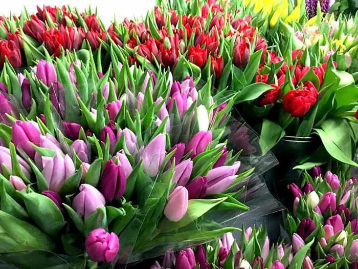 vendita piante e fiori bergamo