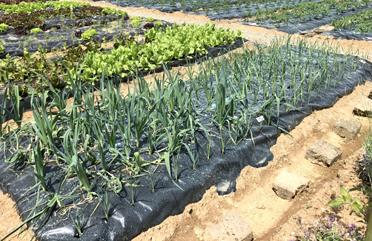 verdure stagionali fresche bergamo