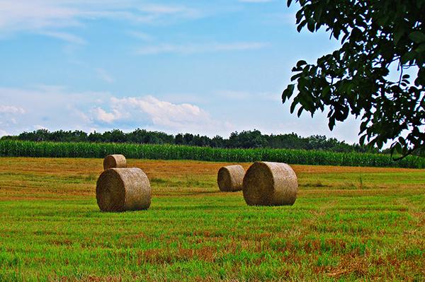 attrezzature agricola roma