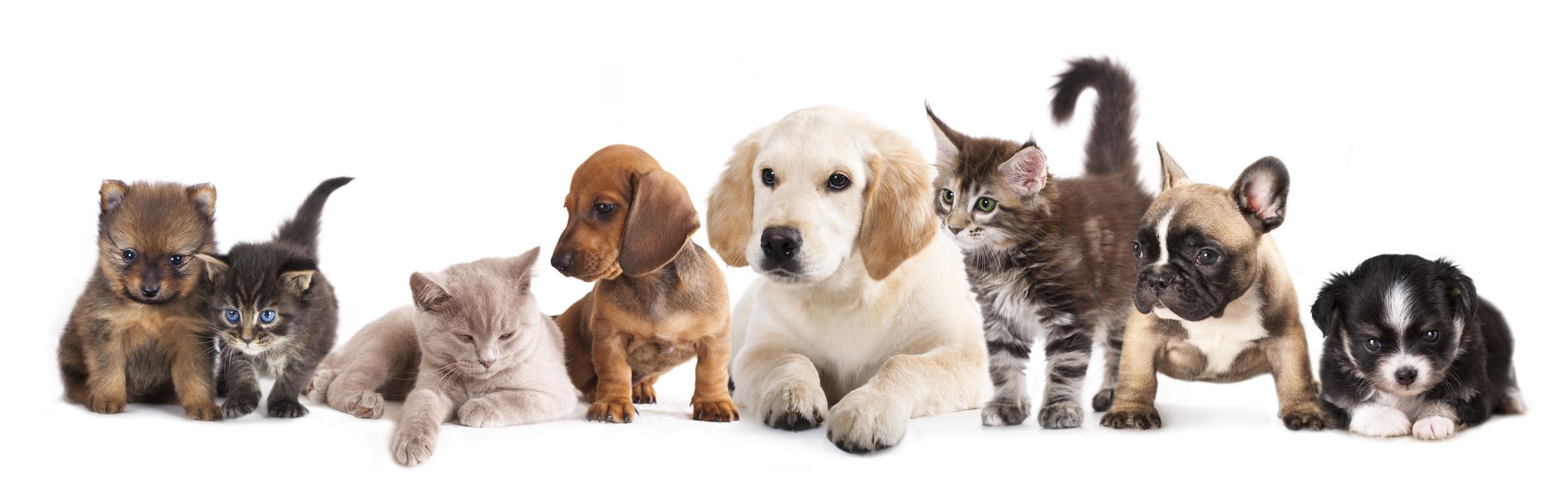 Veterinari per gatti, cani, animali esotici