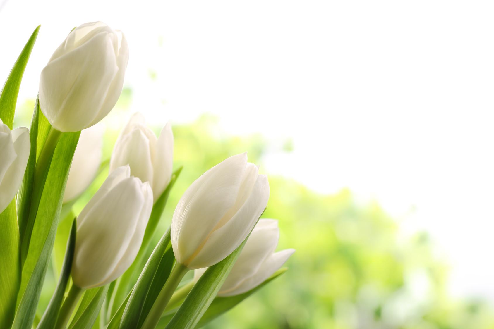 fiori per matrimonio palermo