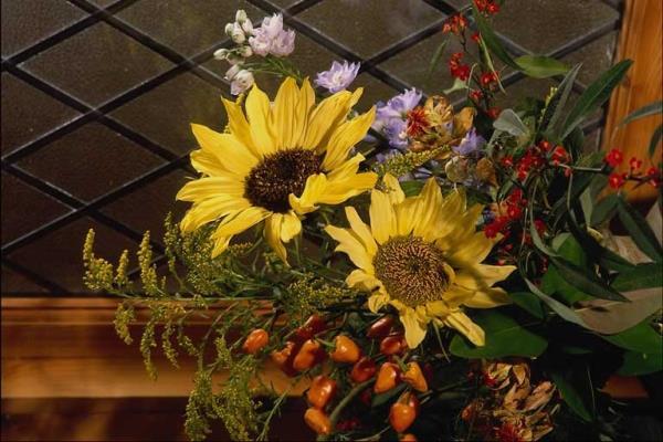 Girasoli - Allestimento esterno chiesa - Piante e fiori di Antonio D