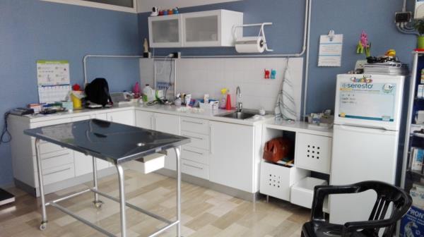 Cura Animali Domestici Ambulatorio Veterinario Misantone a Teramo