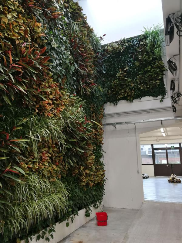 progettazione spazi verdi verticali