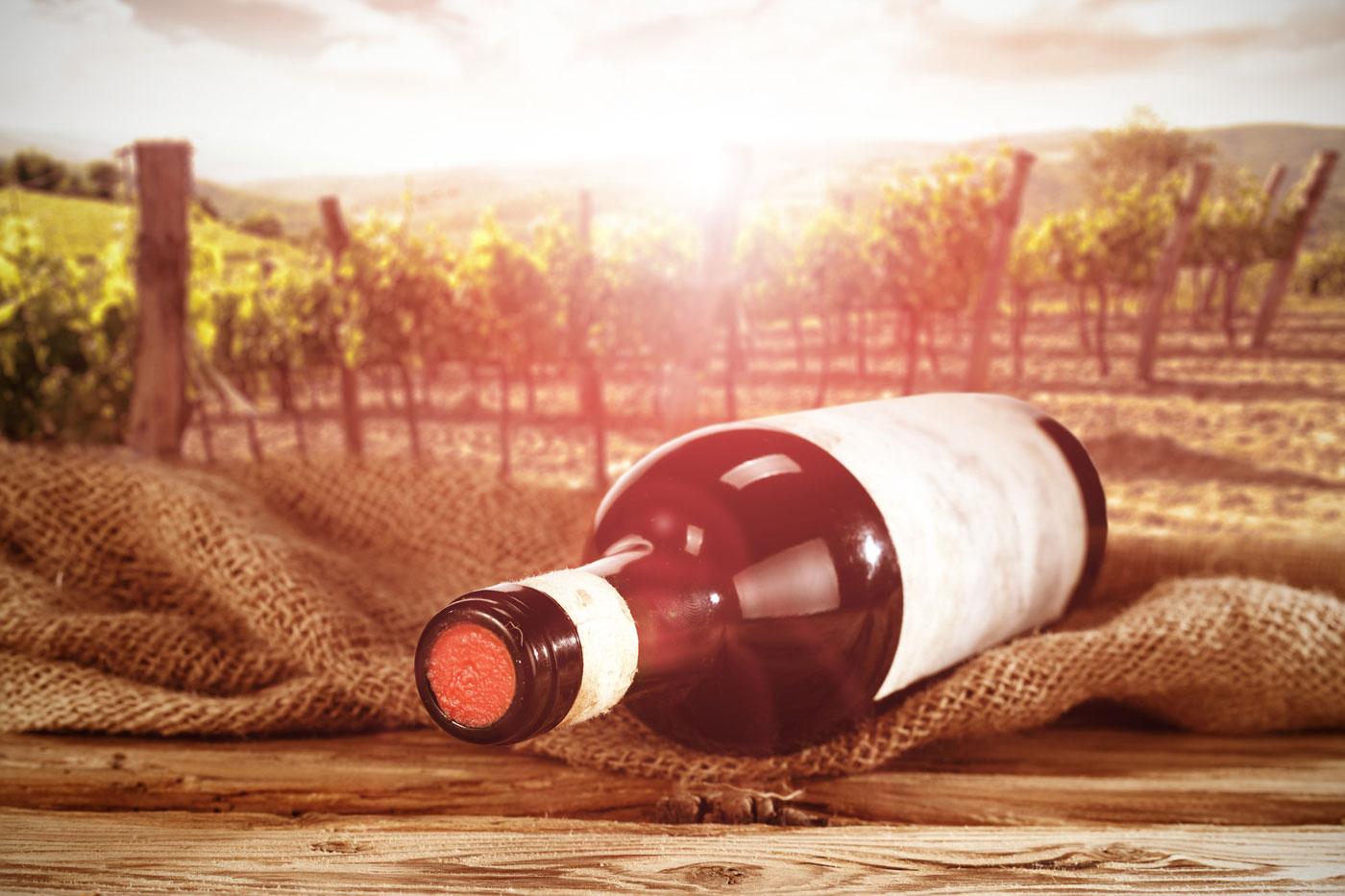 Vini biologici e distillati