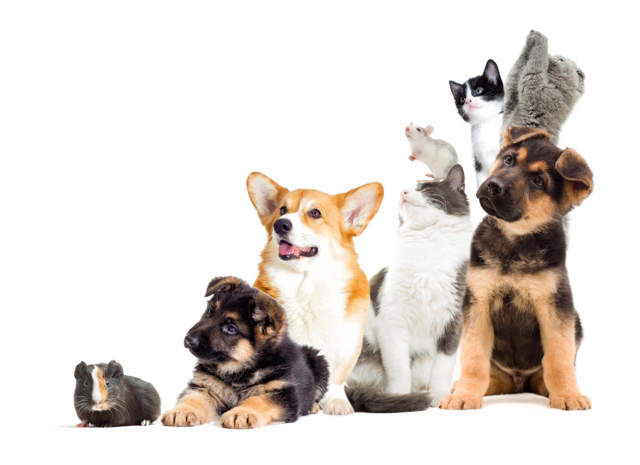 farmacia veterinaria monterotondo