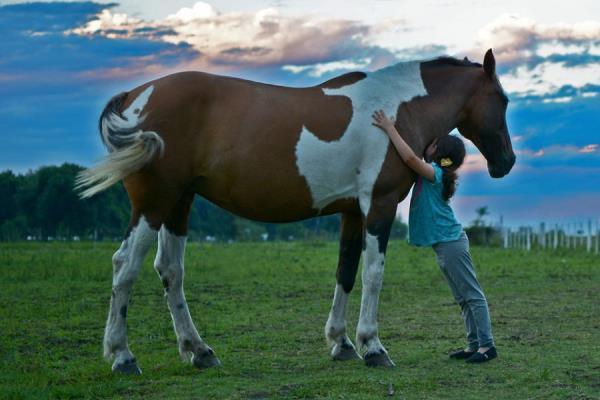 Campi scuola estivi di equitazione