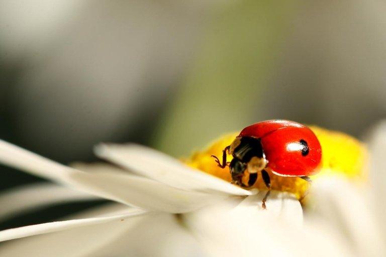 Riconoscere gli insetti