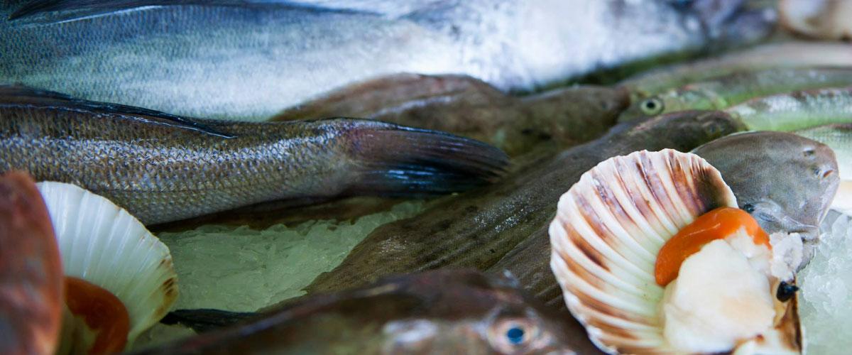 Ristorante con specialità di pesce san maurizio d'opaglio novara