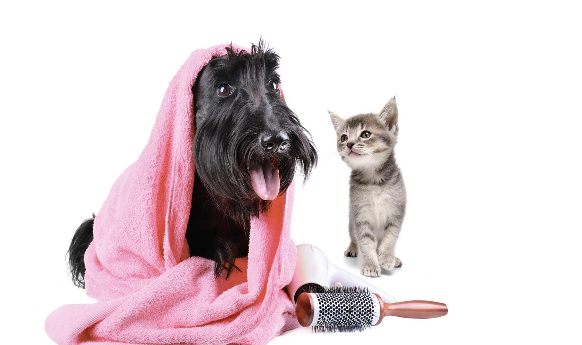 toelettatura cani e gatti Cosenza