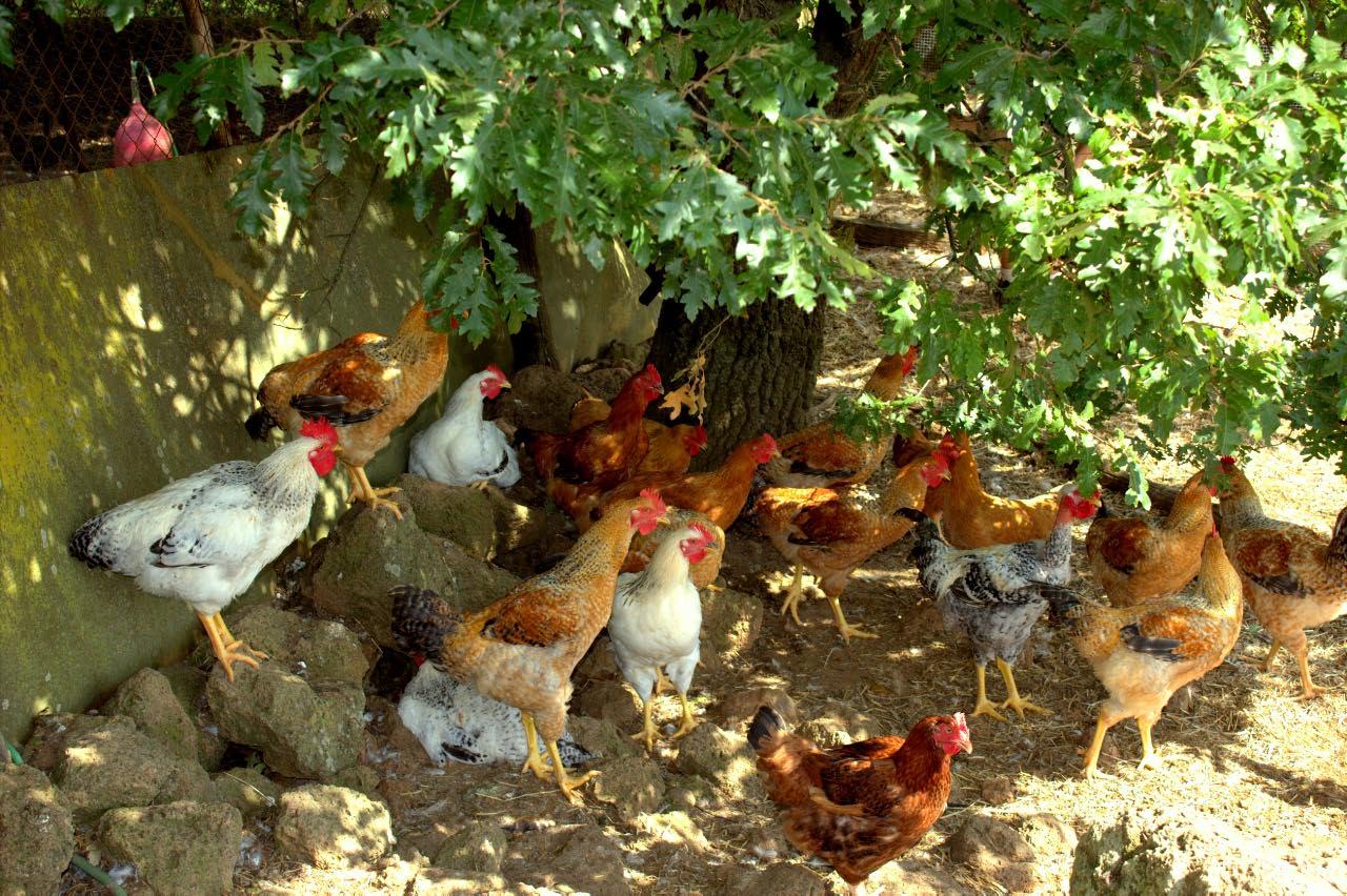 azienda agricola sorano