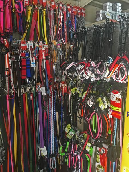 accessori per cani rieti