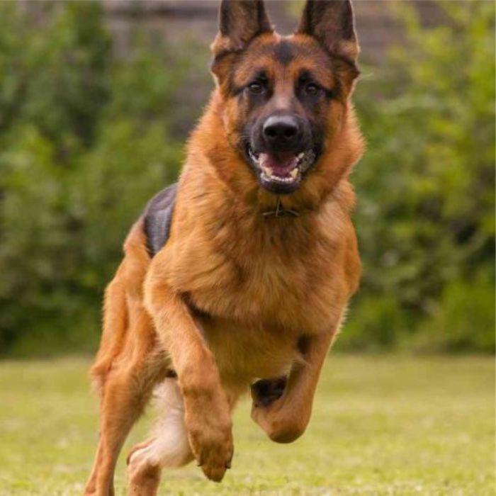 Pensione per Cani Chiusavecchia Imperia Savona | Canile Imperia Savona | Pensione per Animali GLI ULIVI