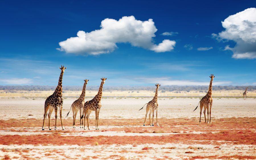 viaggio kenia parchi naturali