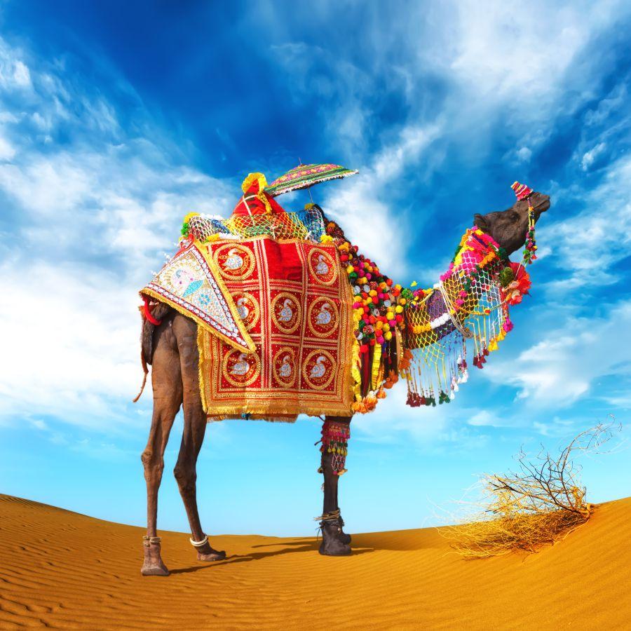 viaggio emirati arabi