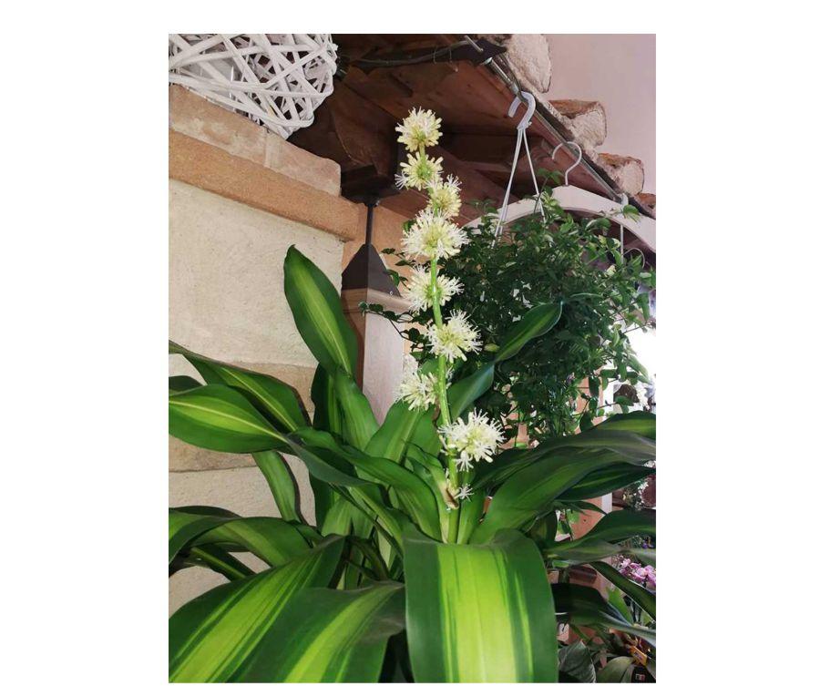 vendita piante da fiore poggibonsi