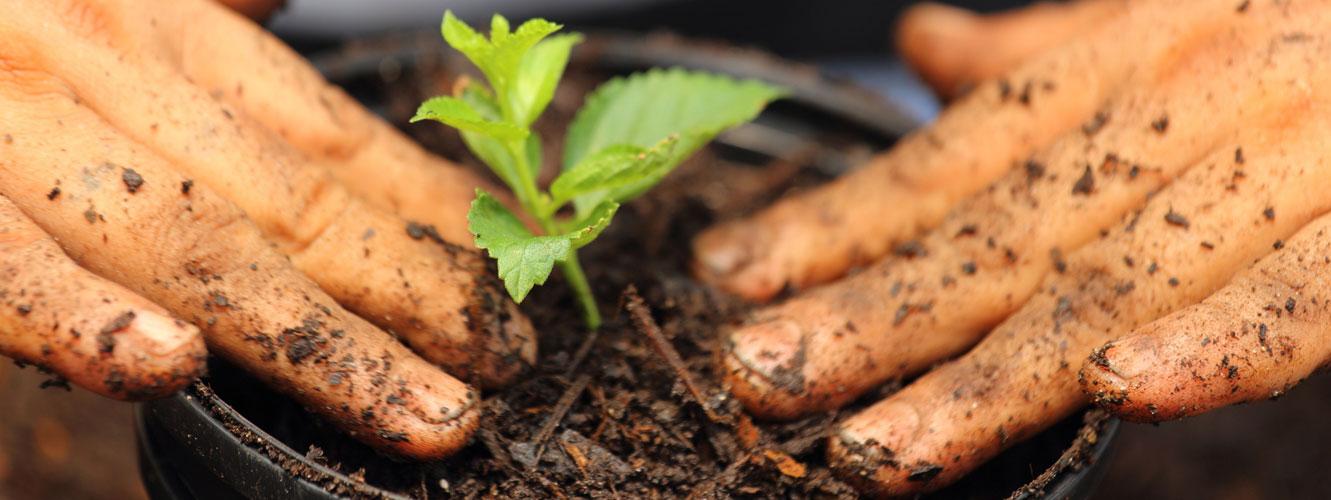 vendita prodotti per il giardinaggio carrara