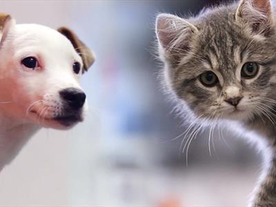 Pet prodotti per animali domestici
