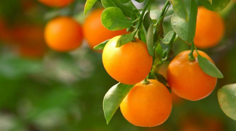 prodotti per agricoltura Reggio Calabria