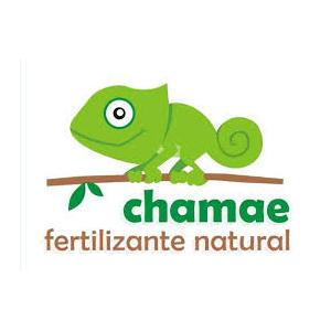 Chamae