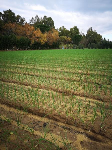 concimi organici per agricoltura Reggio Calabria