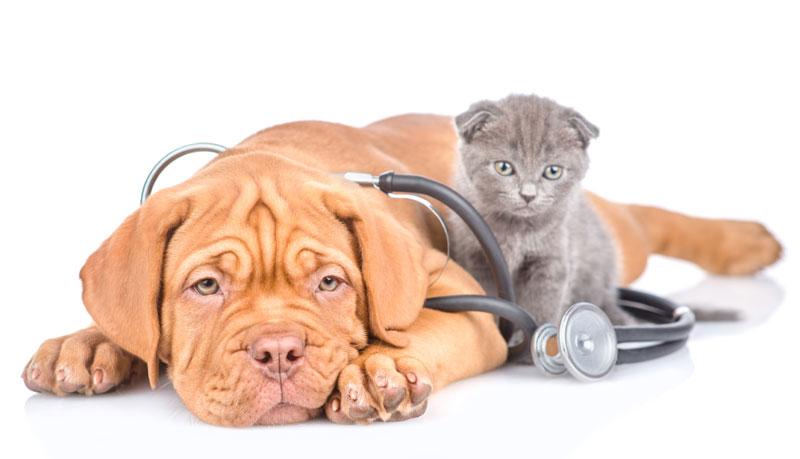 consulenza veterinaria Cologno Monzese