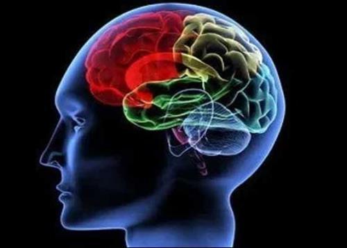 Il cervello si protegge a tavola