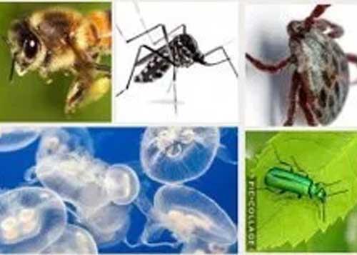 Consigli e rimedi contro le punture di insetti e meduse.