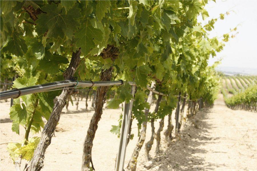 Impianti di Irrigazione per Vigneti Albenga (Savona)