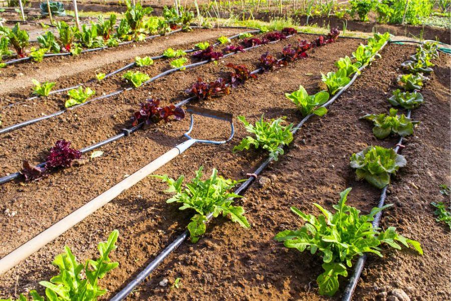 Impianti di Irrigazione per Orto Albenga (Savona)