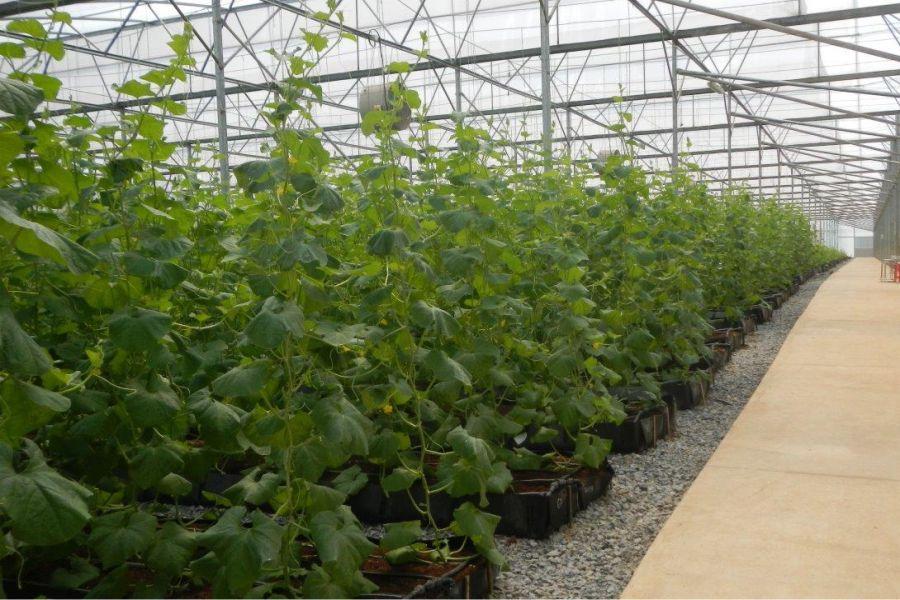 Impianti di Irrigazione Fuori Suolo Albenga (Savona)