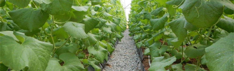 Impianti di Irrigazione Fuori Sulo Albenga (Savona) | FLOR SYSTEM