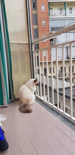 Montaggio reti di sicurezza per gatti