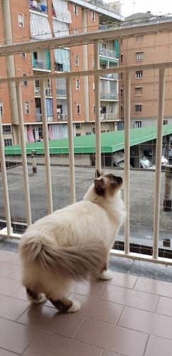 Protezione per balcone
