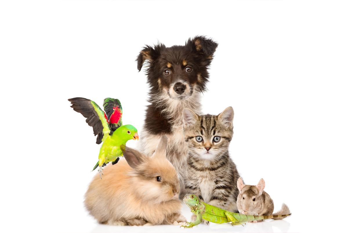 Vendita  prodotti  per  animali  domestici ed  esotici