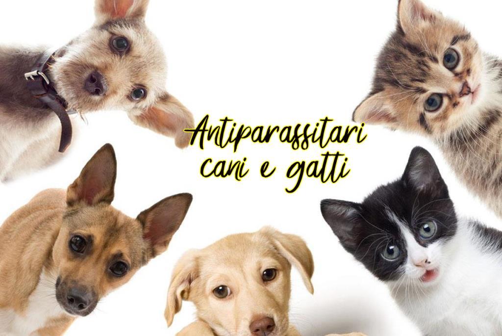 Prendersi cura dei vostri animaletti, significa anche proteggerli... presso il nostro shop troverai tanti prodotti che trattano i problemi legati ai parassiti.