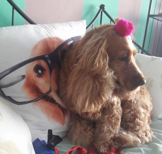 toelettatura cani meticci