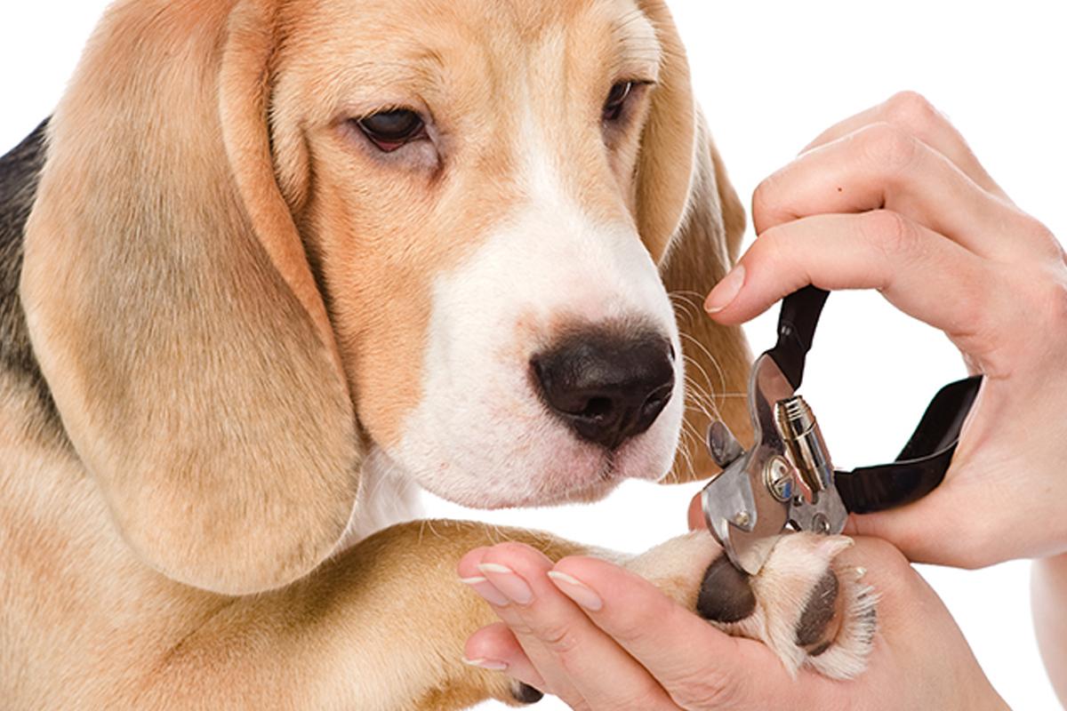 Taglio unghie e pulizia orecchie