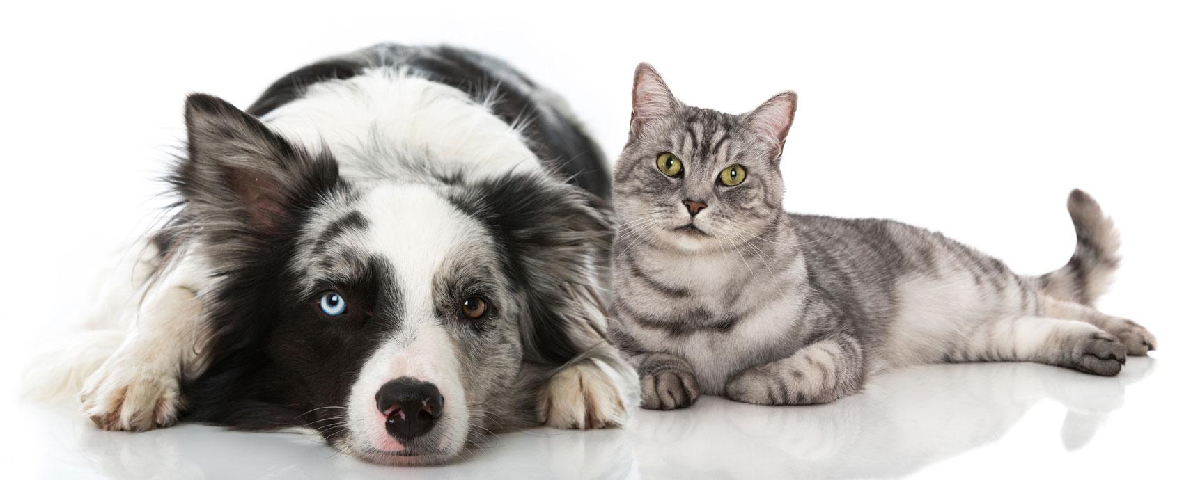 Studio medico veterinario